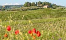 Excursión a los viñedos y olivos