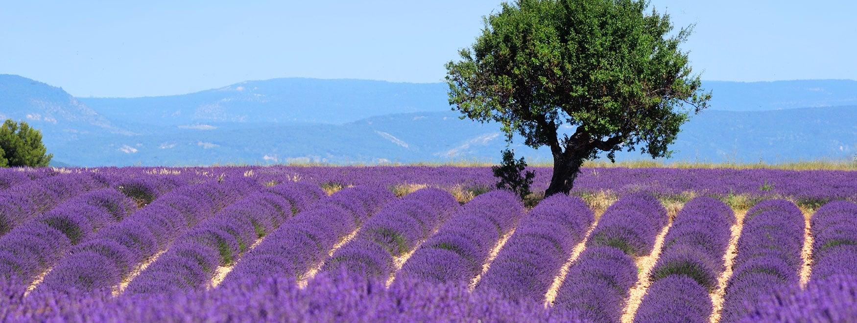 Excursión a la Provence