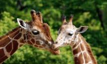 Excursión al zoo de Montpellier